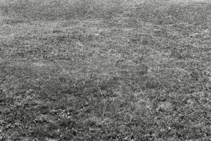 untitled canvas thread blown by the wind while flying a kite Governors Island variable dimension documentary photograph, gelatin silver print 2012