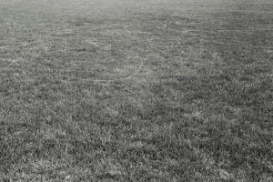 canvas thread blown by the wind while flying a kite Van Cortlandt Park variable dimension documentary photograph, gelatin silver print 2013