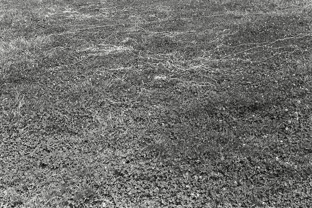 canvas thread blown by the wind while flying a kite South Meadow, Snug Harbor variable dimension documentary photograph, gelatin silver print 2013